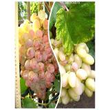 Комплект из 2-х сортов в Астрахани - Виноград Преображение + Виноград Фламинго