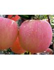 Яблоня Фуджи в Астрахани